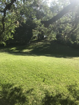Tranquil Meadow Perfect for Meditation in San Antonio